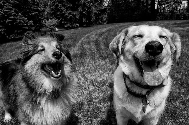 szczęśliwe psiaki