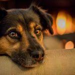 Czy adoptować psa ze schroniska?