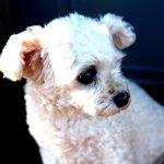 Co zrobić by pies sam został w domu?