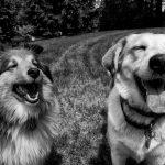 Psie uszy, dbanie i choroba