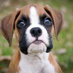 Kto organizuje wystawy psów?